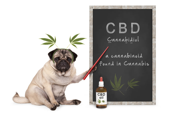 CBD Oil for Dog Seizures: Here's What You Should Know