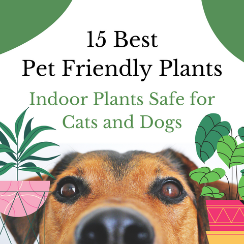 best pet friendly plants indoor plants safe for cats and dogs