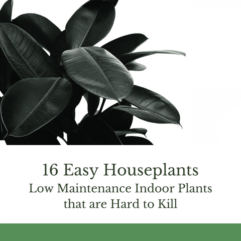 Easy Houseplants - Low Maintenance Indoor Plants that are Hard to Kill