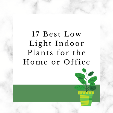 best low light indoor plants for the home or office