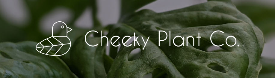 Cheeky Plant Co - About Us - Banner