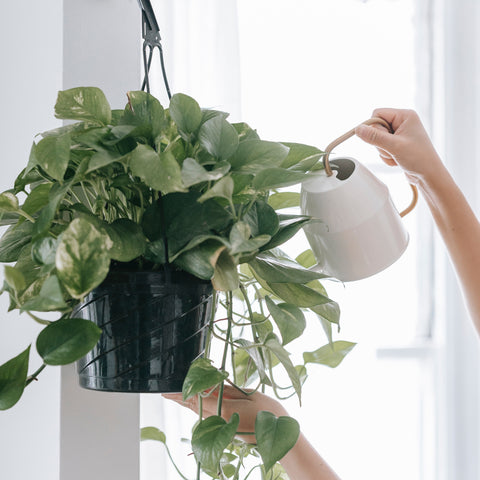 Common Reasons Why Your Plants Keep Dying