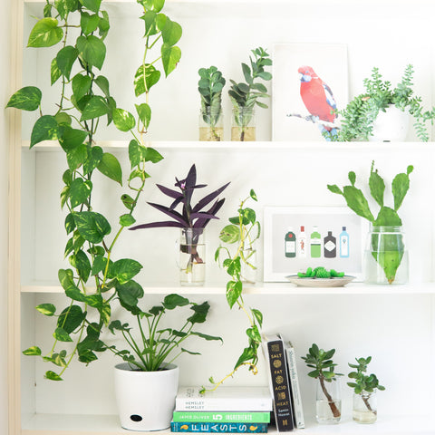 Five Indoor Plants to Boost Your Mood and Health