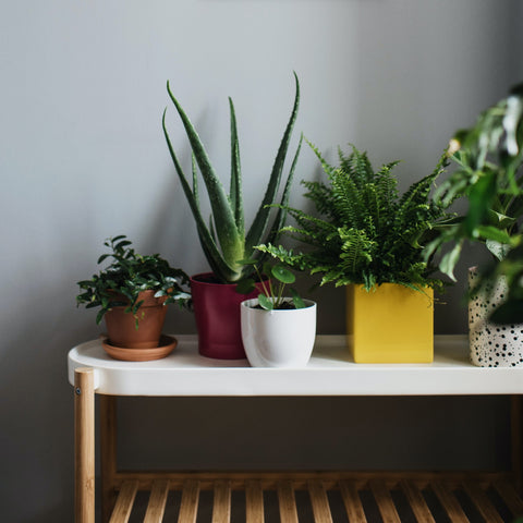 Five Reasons Why You Should Decorate Your Home with Houseplants