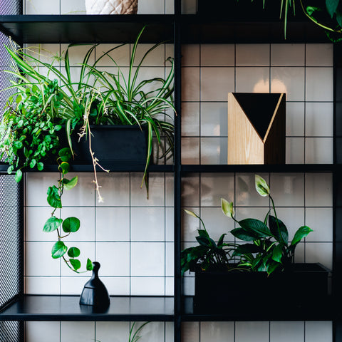 How to Create an Indoor Jungle