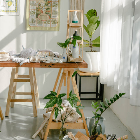How to Find the Best Light for Houseplants