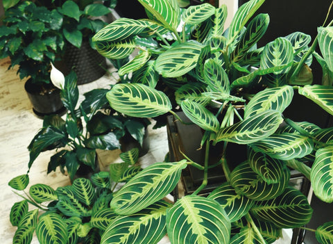 How to Keep Indoor Plants Alive While You're on Holidays
