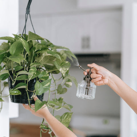 How to Maintain Hanging Plants