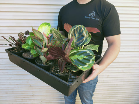 cheeky plant co owner holding plant tray