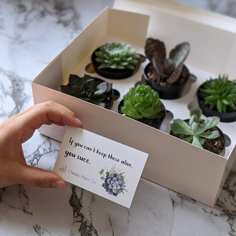corporate gifts plants succulents gift box