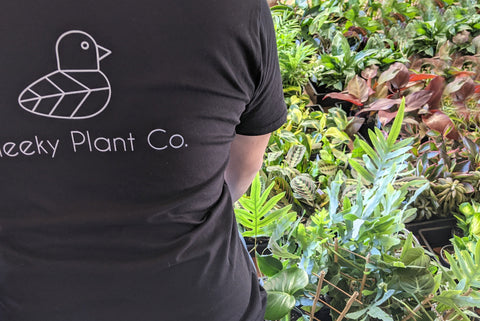 cheeky plant co owner with lots of plants