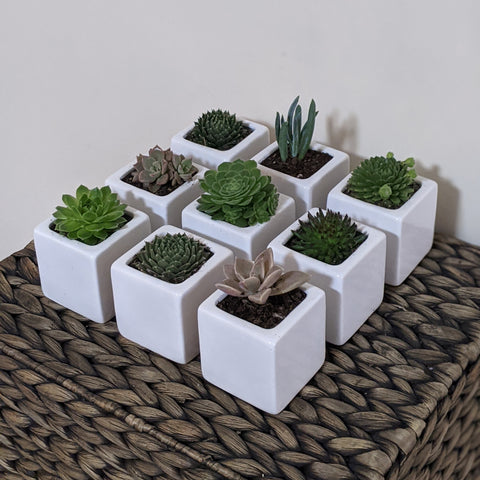corporate succulent gifts - Sydney - side angled view