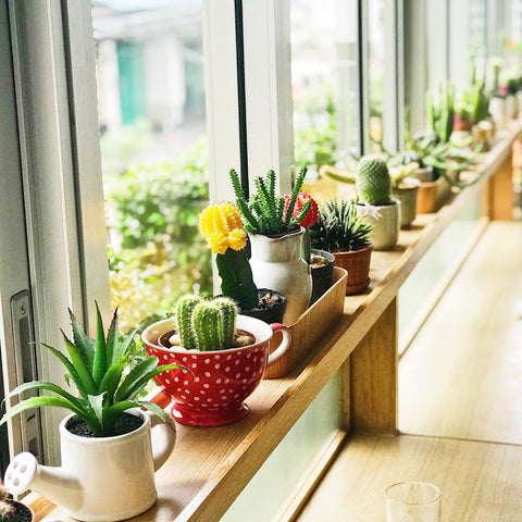 Seven Benefits That Houseplants Can Have on Your Health