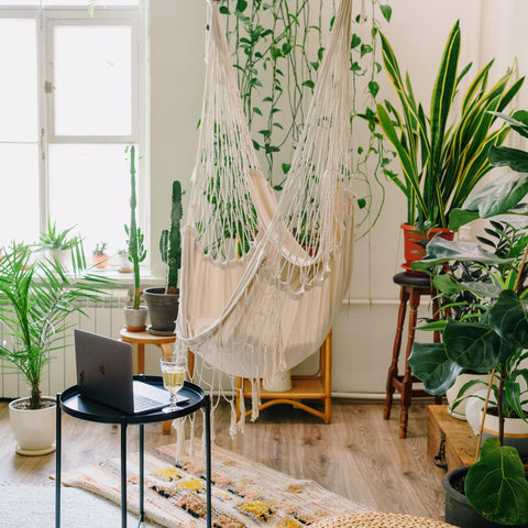 The Positives of Having Indoor Plants