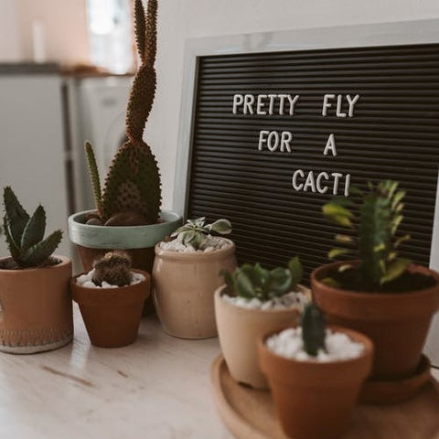 Why Succulents Are a Great Gift