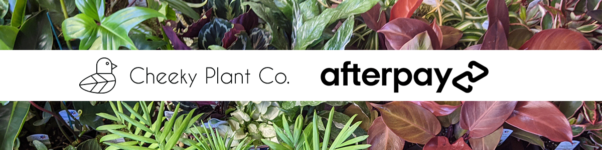 cheeky plant co. x afterpay plants australia