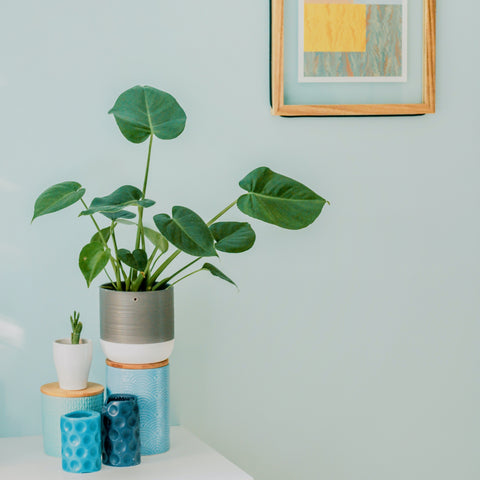 how to pick the perfect houseplants