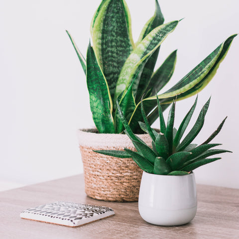 What Are the Best Pots for Succulents?