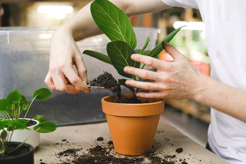 Ideal Potting Soil for Your Indoor Plants