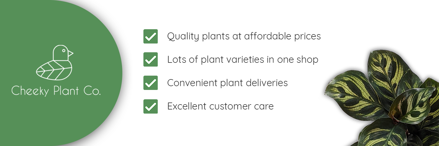 Why buy from Cheeky Plant Co.?