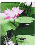 Arts Language Wooden Framed Paint by Numbers Diy Painting-T1299 The Bird Is Under The Lotus