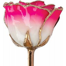 Load image into Gallery viewer, Lacquered Cream Magenta Rose with Gold Trim