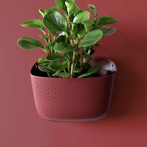 WallyGro Planter