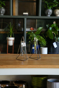 Vector Stand With Cutting/Propagation Tubes