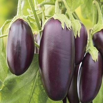 Mr Fothergills - AUBERGINE Jewel Jet F1 Vegetable Seeds | Snape & Sons