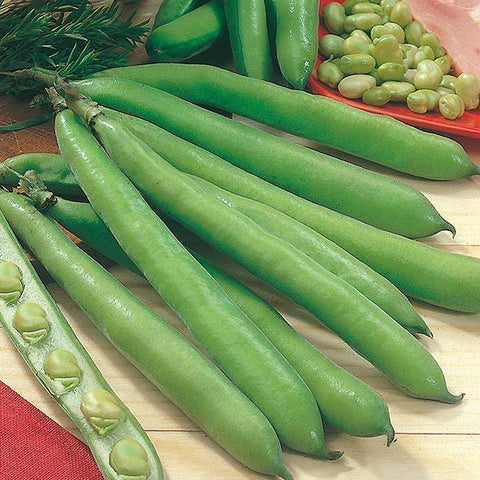 Mr Fothergill's - BROAD BEAN Aguadulce Seeds Vegetable Seeds | Snape & Sons