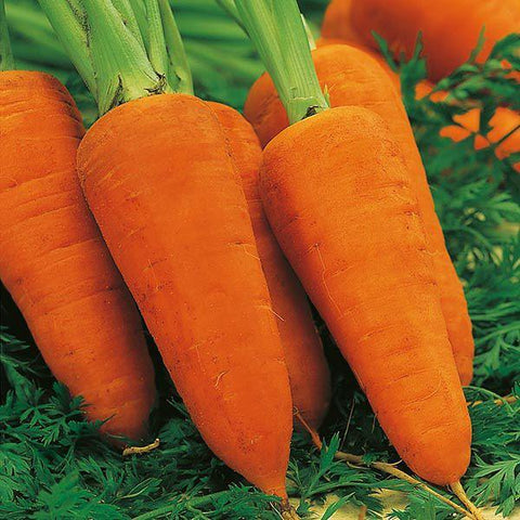 Mr Fothergill's - CARROT Chantenay Red Cored 2 Seeds Vegetable Seeds | Snape & Sons
