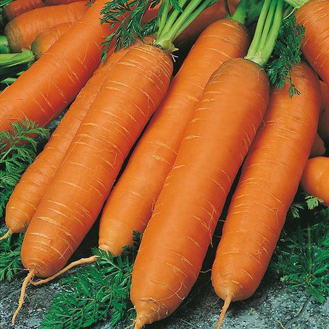 Mr Fothergill's - CARROT Flyaway F1 Seeds Vegetable Seeds | Snape & Sons