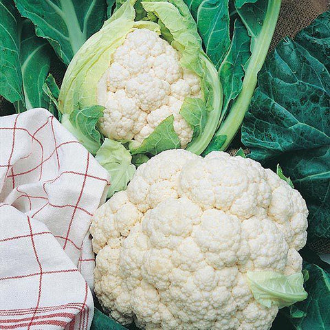 Mr Fothergill's - CAULIFLOWER All The Year Round Seeds Vegetable Seeds | Snape & Sons