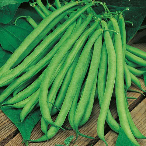 Mr Fothergill's - CLIMBING BEAN Blue Lake Seeds Vegetable Seeds | Snape & Sons