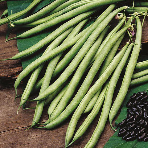 Mr Fothergill's - CLIMBING BEAN Cobra Seeds Vegetable Seeds | Snape & Sons