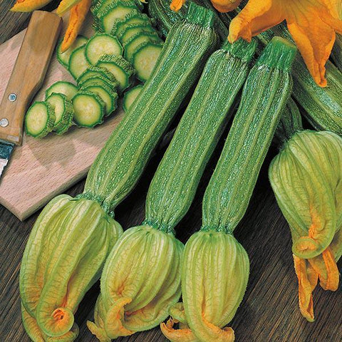 Mr Fothergill's - COURGETTE Romanesco Seeds Vegetable Seeds | Snape & Sons