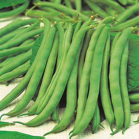 Mr Fothergill's - DWARF BEAN Tendergreen Seeds Vegetable Seeds | Snape & Sons