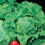 Mr Fothergill's - LETTUCE Webbs Wonderful Seeds Vegetable Seeds | Snape & Sons