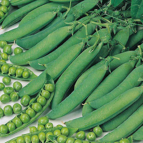 Mr Fothergill's - PEA Hurst Greenshaft Seeds Vegetable Seeds | Snape & Sons