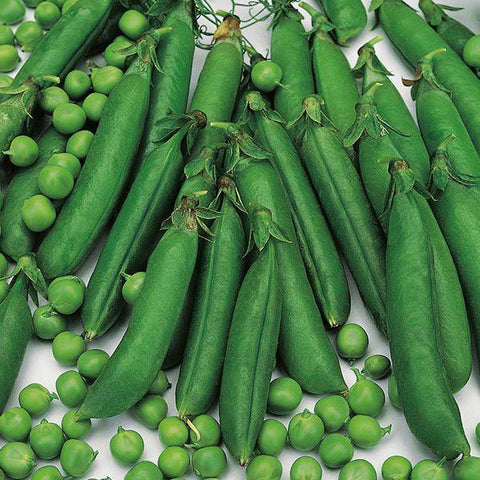 Mr Fothergill's - PEA Meteor Seeds Vegetable Seeds | Snape & Sons