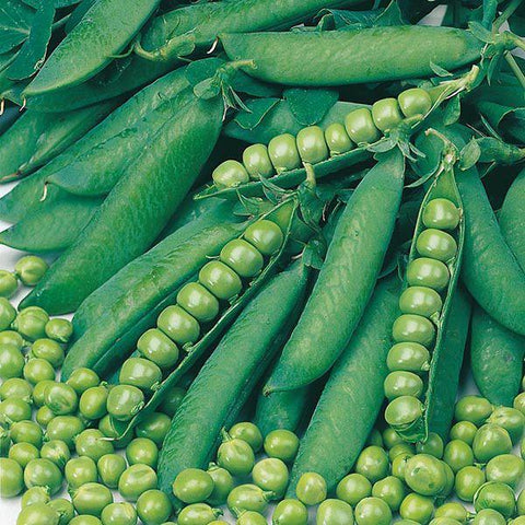 Mr Fothergill's - PEA Onward Seeds Vegetable Seeds | Snape & Sons