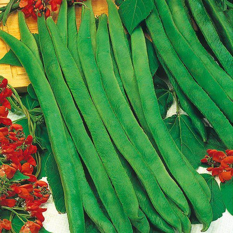 Mr Fothergill's - RUNNER BEAN Enorma Seeds Vegetable Seeds | Snape & Sons