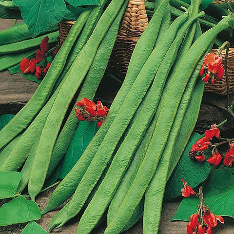 Mr Fothergill's - RUNNER BEAN Polestar Seeds Vegetable Seeds | Snape & Sons