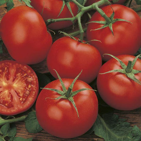 Mr Fothergill's - TOMATO Moneymaker Seeds Vegetable Seeds | Snape & Sons