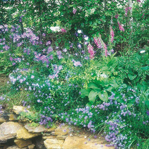 Mr Fothergill's - WF Woodland Mixture Seeds Flower Seeds | Snape & Sons