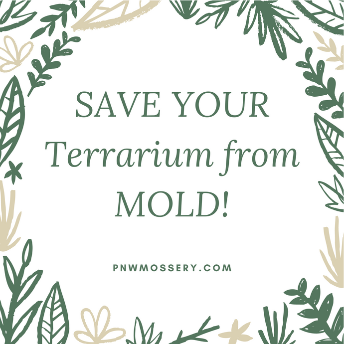 Save Your Terrarium From Mold!