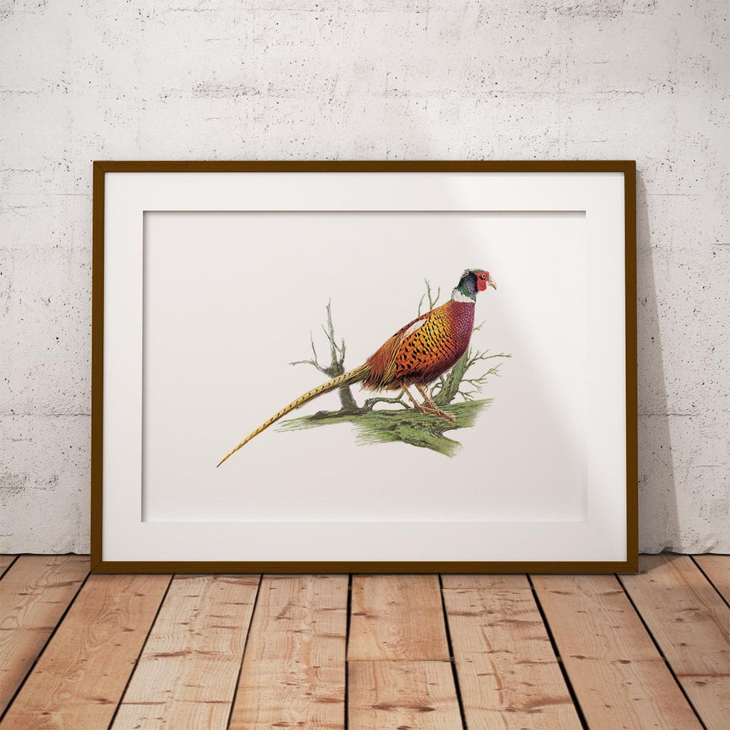 Cock Pheasant on Branch Wall Art Print - Countryman John