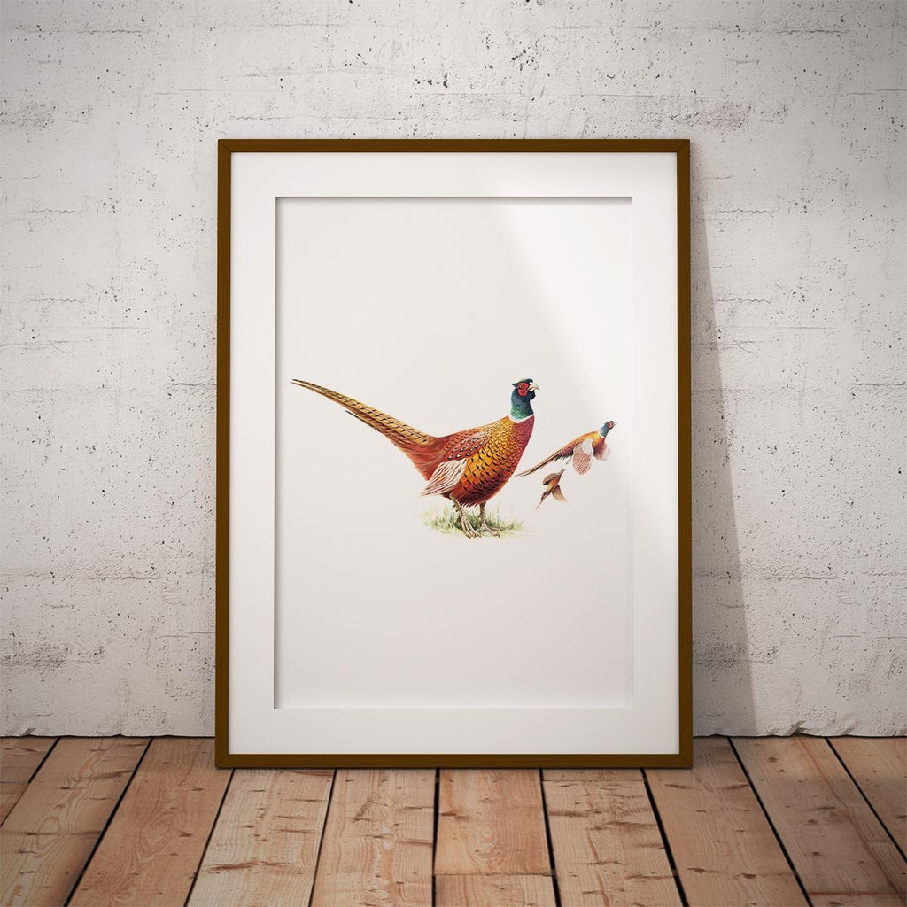 Cock Pheasants Wall Art Print - Countryman John