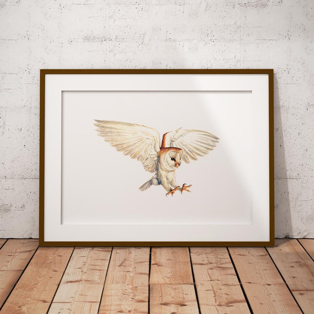 Barn Owl Wall Art Print - Countryman John