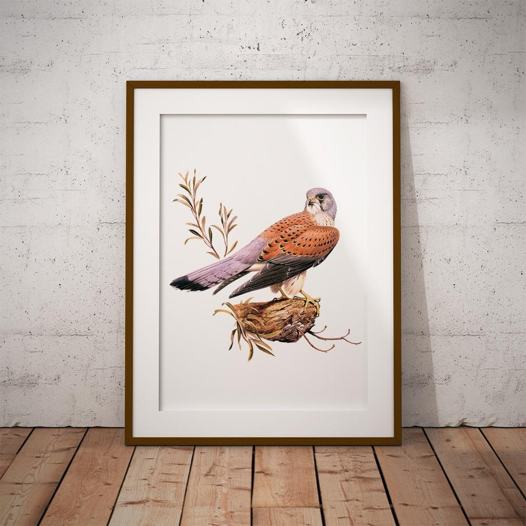 Kestrel Wall Art Print - Countryman John